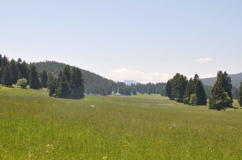Paysage typique de la campagne de Suisse romande, prés et sapins verts, Vallée de Joux